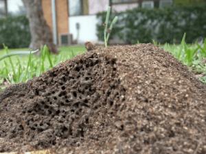 DeBary Pest Control